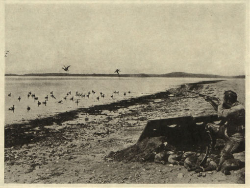 Duck shooting on the prairies. Catalogue reference: CO 1069/286