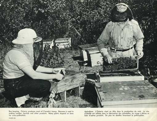Bee keeping. Ontario produces most of Canada's honey. Beeswax is used in making candles, lipsticks and other products. Many plants depend on bees for cross-pollination. Canada 1963. Catalogue reference: CO 1069/295