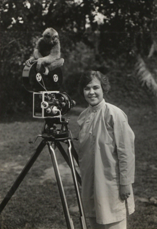A young gibbon sits on a camera, Sabah, Malaysia, 1921. Catalogue reference: CO 1069/530