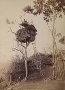Tree house, Koiari village, Papua New Guinea. Catalogue reference: CO 1069/658